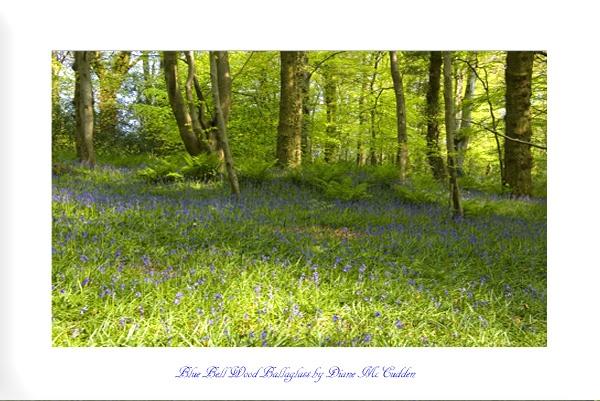 Blue Bell Wood by Diane_McCudden