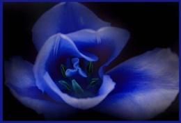 Blue blue Tu