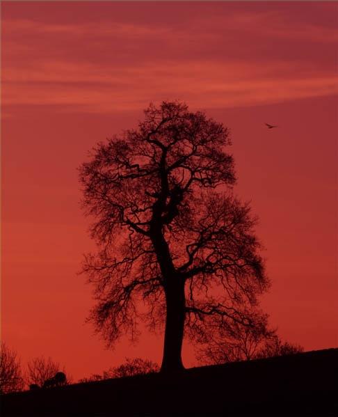 Dawn 5th April