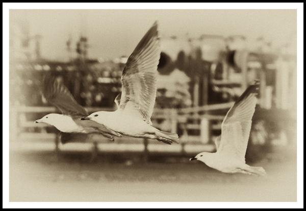 In flight by Gertmint