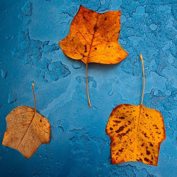 Autumn Colours by psiman