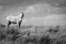 Burren Horse by jkcuddihy