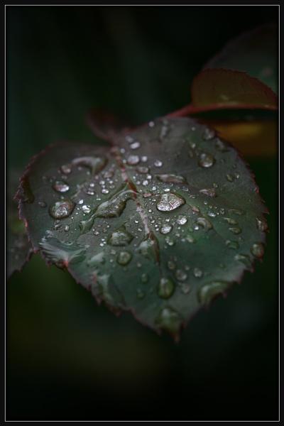 Rain Drops by Morpyre