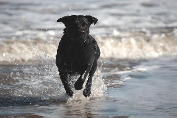 Black Dog by photodocktor