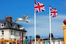 British Summer Segull