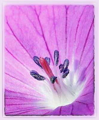 erotique des fleurs by macdaniel