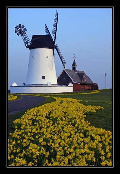 Lytham Windmill and Daffodils 2 by AEasthope67