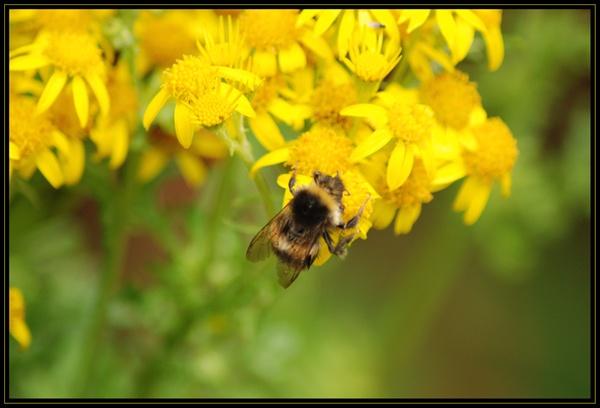 Spring is here! by blondiebee