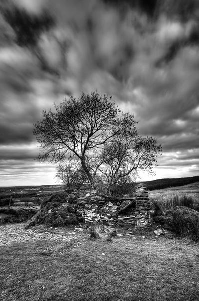 Lonely tree by seanarrow