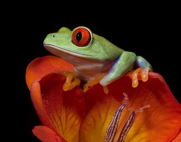 Colourful croaky by Angi_Wallace