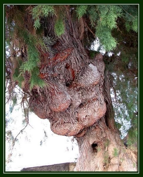 The Tree-man by Stevekriti