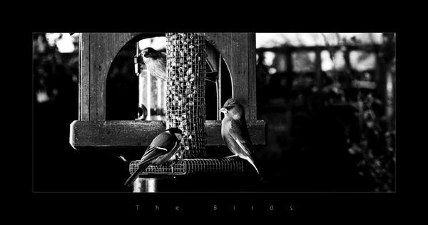 The Birds by moonlightallan
