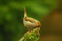 Robin on the Search