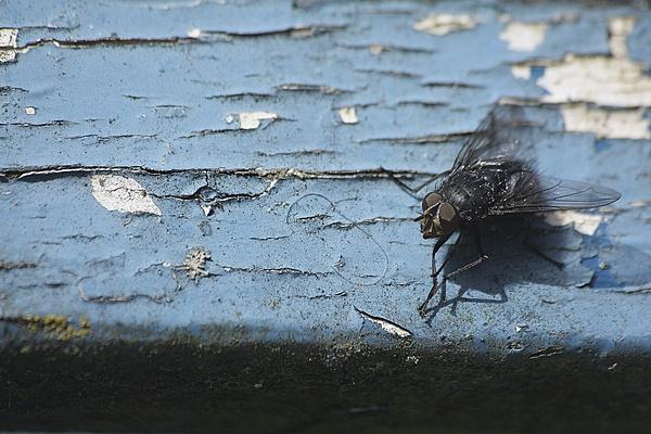 Fly on a Bench by LeonSLR