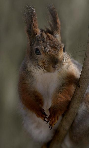 bunny squirrels by maratsuikka
