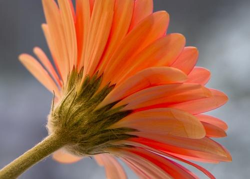 Flower study by Rorymac