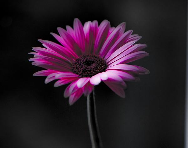 Single bloom by Rorymac