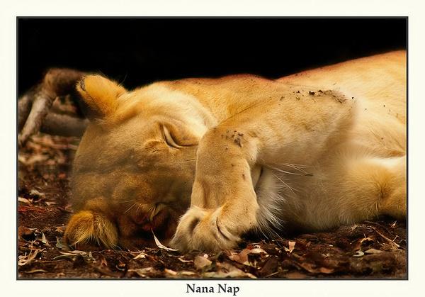 Nana Nap by Joeblowfromoz