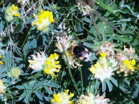 bee by wayne1984