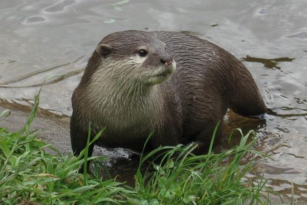 Otter by Rachel99
