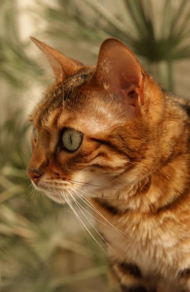 Watching by catmandu