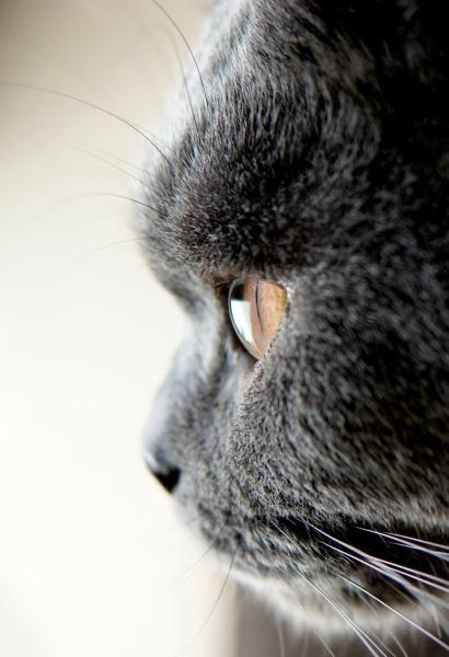 Cat\'s Eye by catmandu