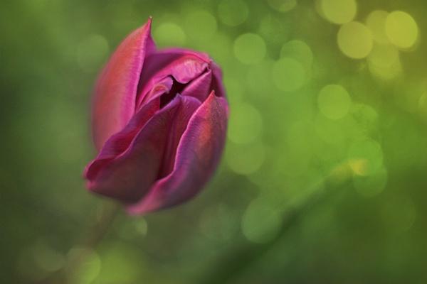 Soft & Shallow by conrad