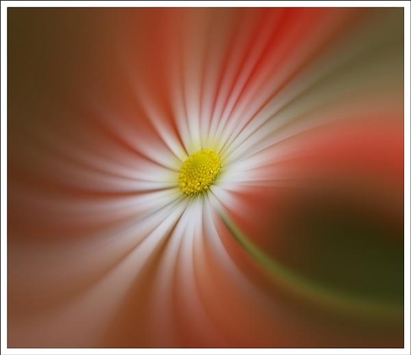 daisy by jacquienewsham
