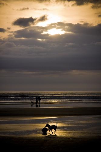 Beach Dog by Skatershrew