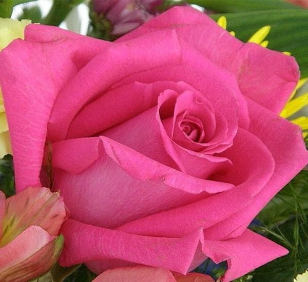 WEDDING  ROSE by PattiW