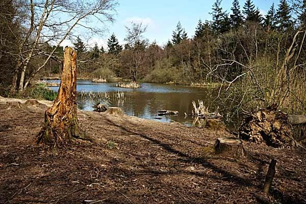 Abbotts Wood Lake by Steb