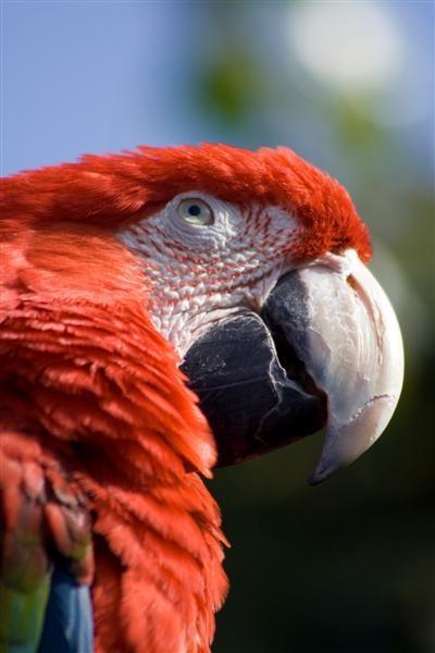 Parrot by spaldingd