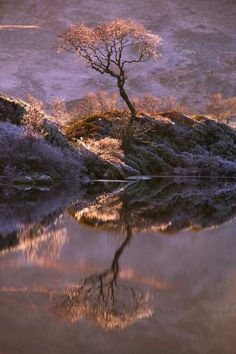 Lochan Tree by carrot_heid