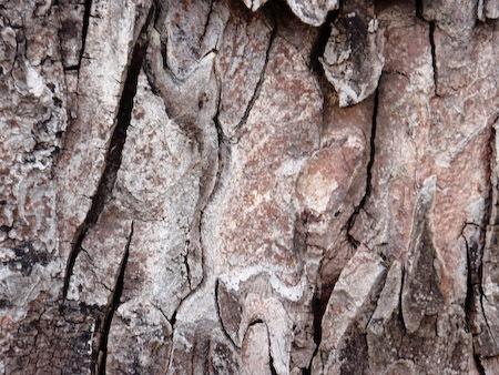 TREE BARK by TimothyDMorton
