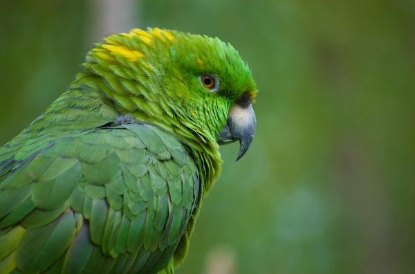 Hi, I\'m a Parrot by mrcran
