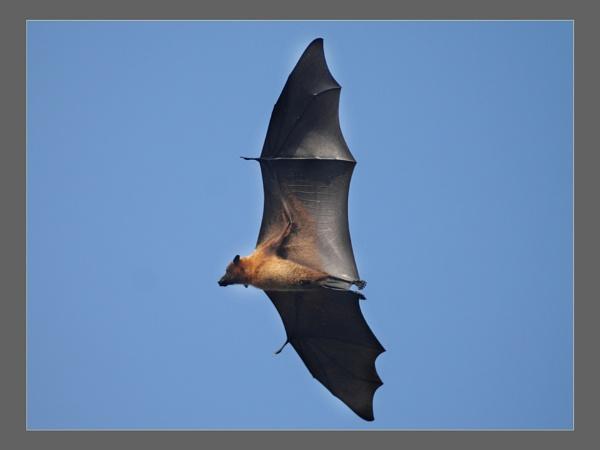 the bat by tsreddy