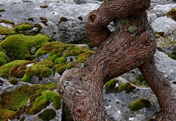 Moss shadow by alansdottir