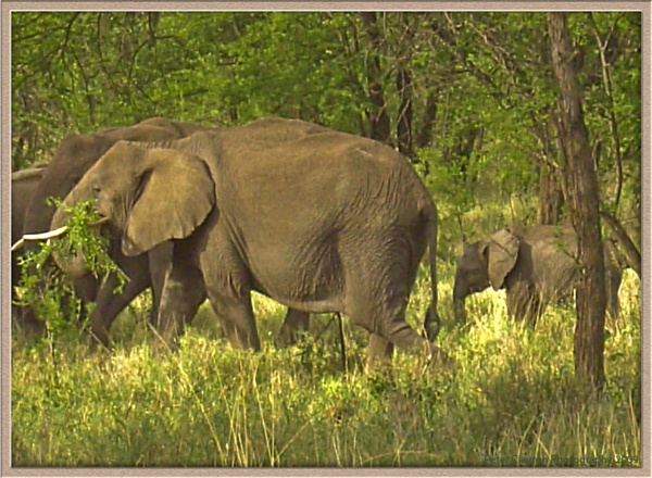 Elephants galore by Clayey