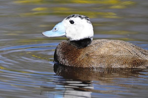 Ducky by Rorymac