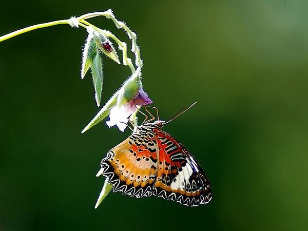 Butterfly. by hoang_van