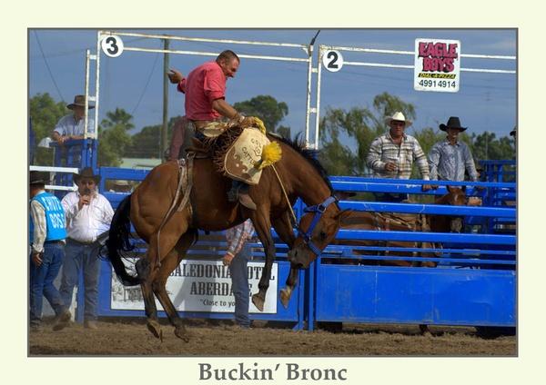 Buckin\' Bronc by Joeblowfromoz
