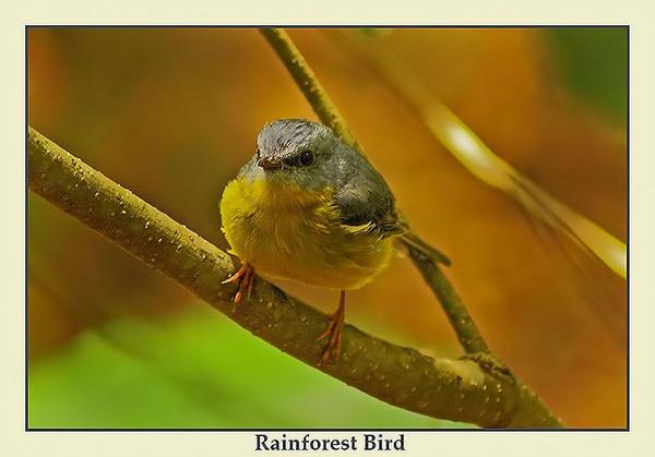 Rainforest Bird by Joeblowfromoz