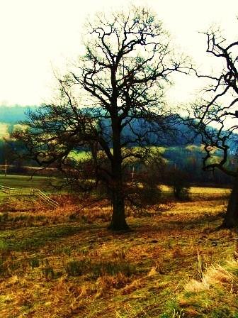 lone tree by wayne1984