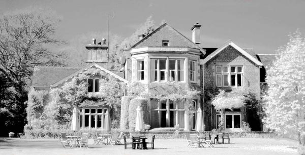 House with magnolia tree by Alciabides