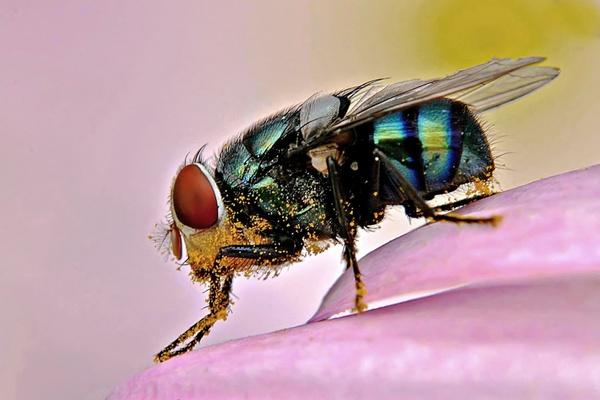 Pollen Laden by poppy59