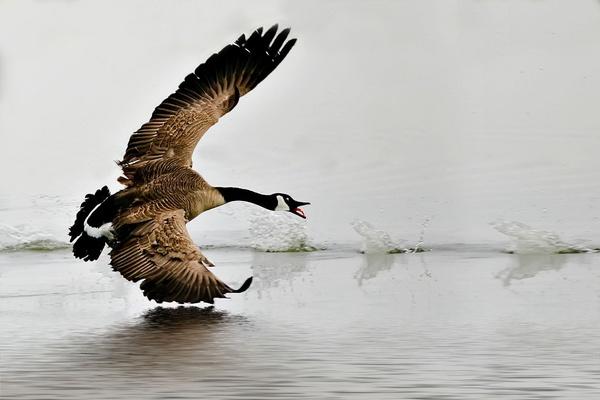 Wild Landing by poppy59