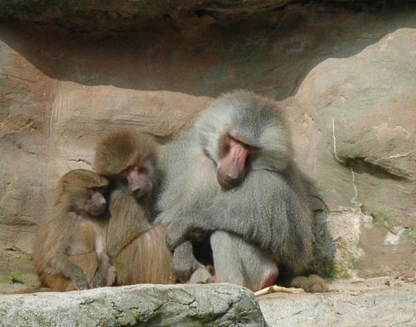 zoo by darrennmel