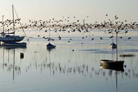 flocking fantastic by tinareid1