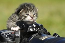 Nikon Cat....