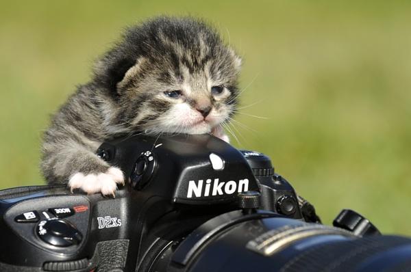Nikon Cat.... by digitalpic